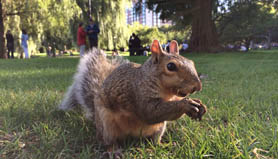 iphone 5s squirrel with nut up close