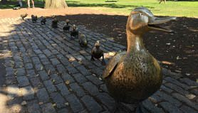 iphone 6 duck and ducklings statues
